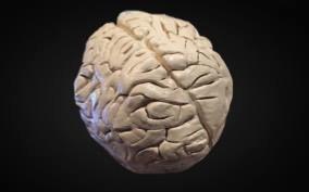 Dionne's Brain_Tree of Life Ceramic (Spring 2016)