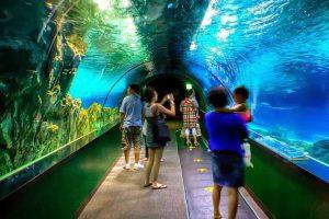 seoul_ocean_aquarium_-_coex_aquarium_4715807