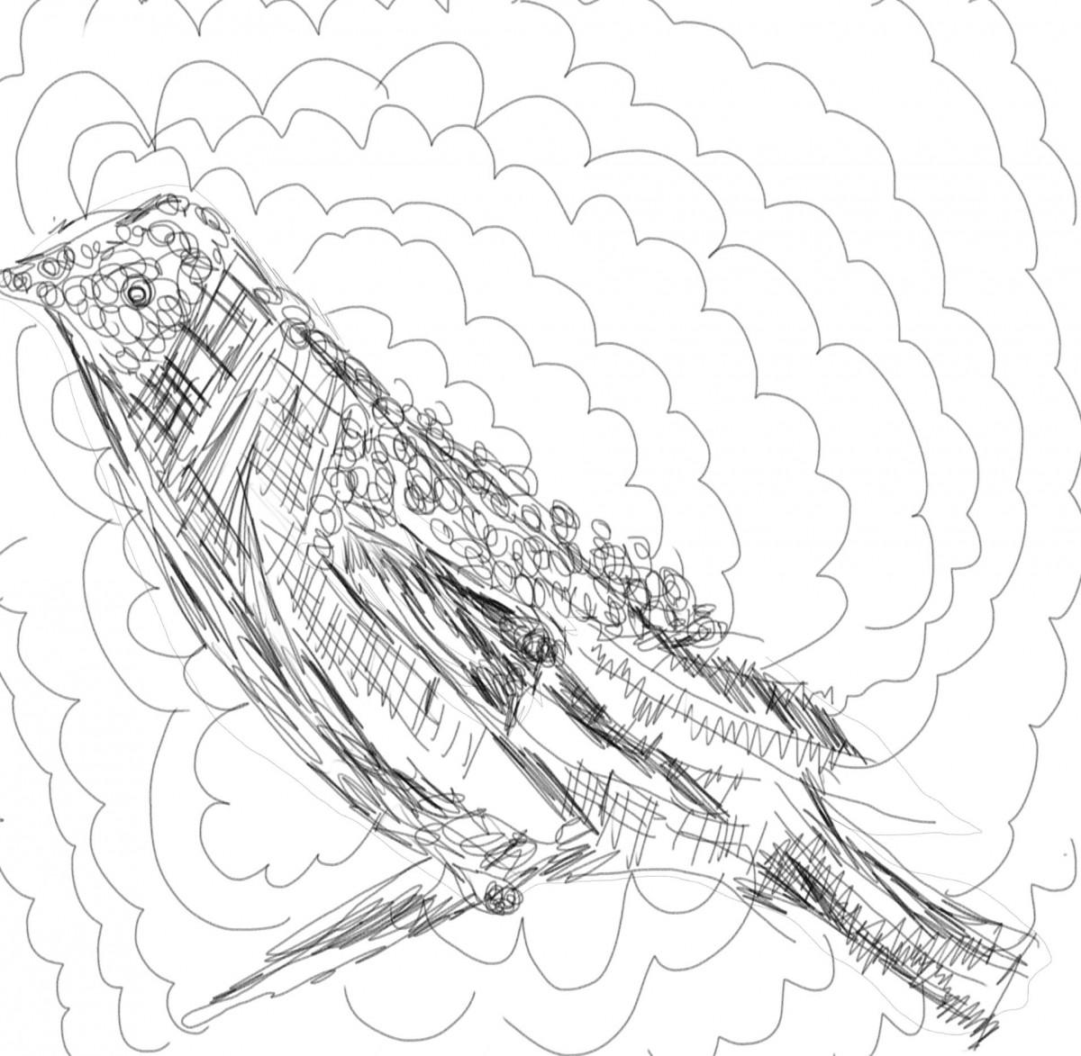 pelemary sketch 2