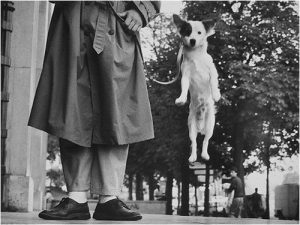 Photograph of a man's legs next to a jumping dog photographed in mid-jump