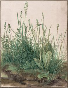 Watercolor by Durer of a large piece of turf with detailed grass.