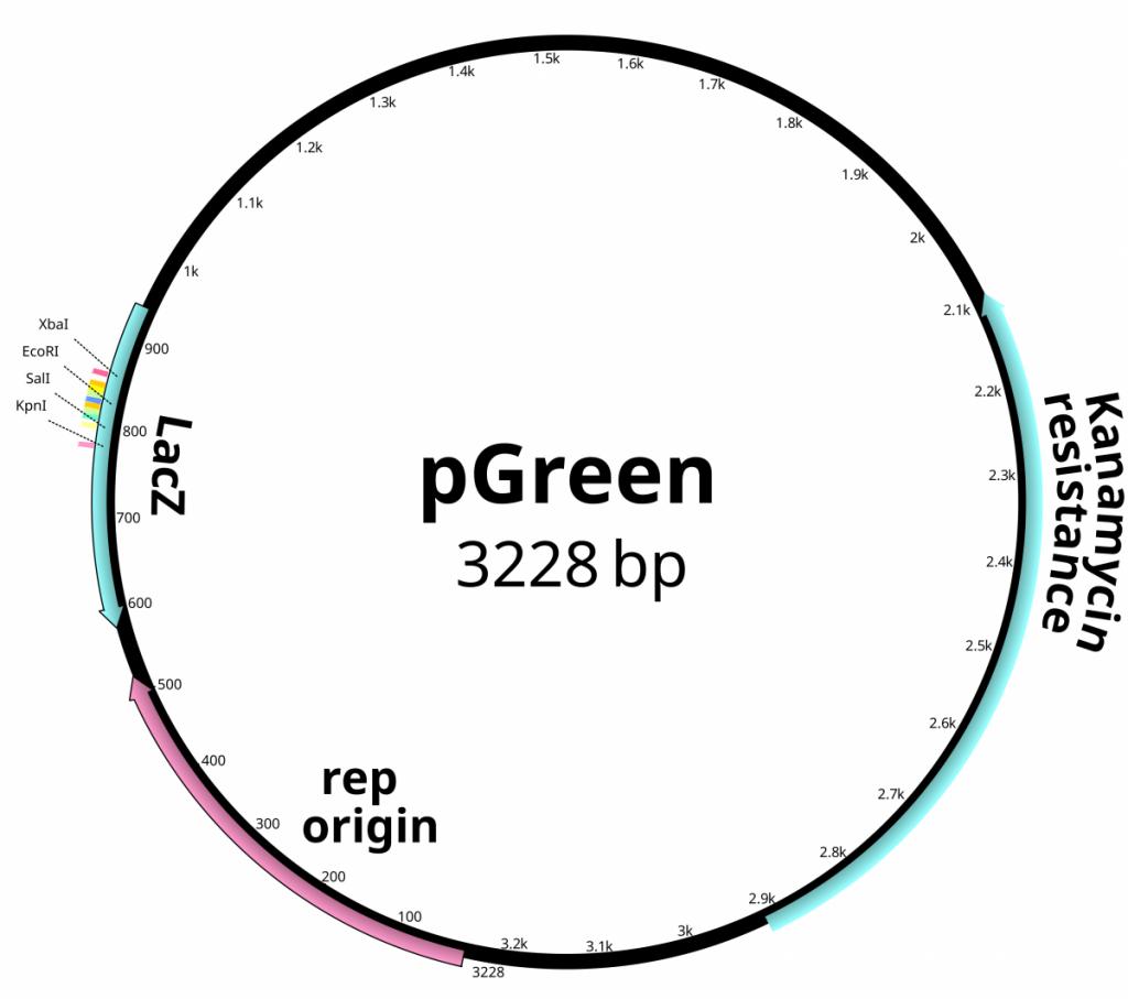 pGreen