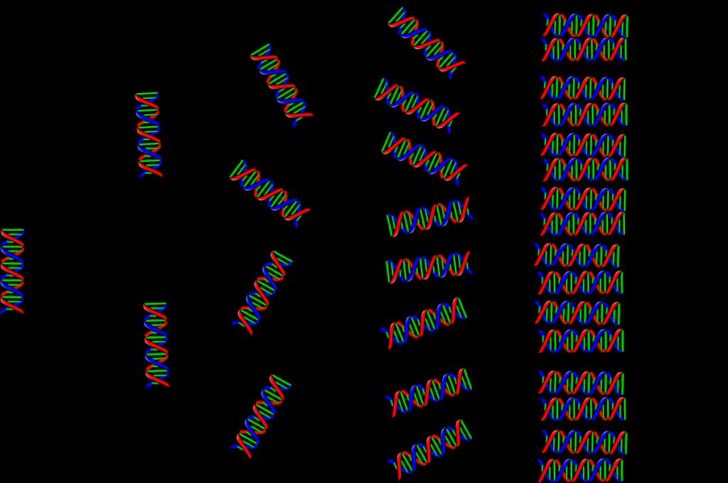 pcr-schema