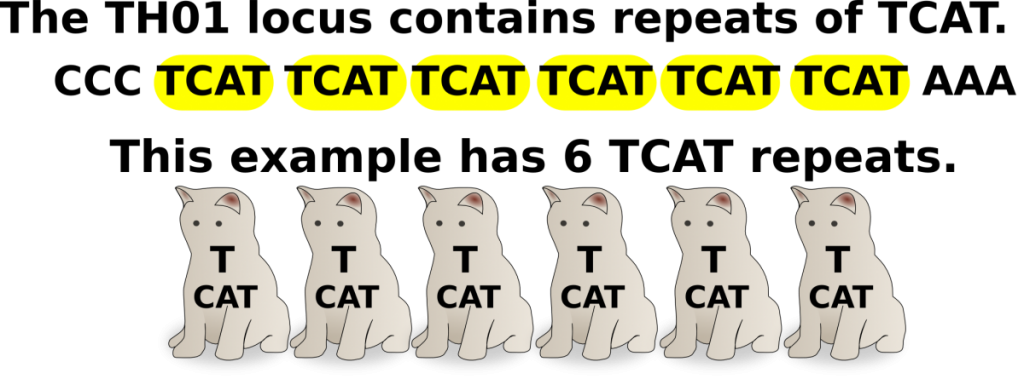 tcat-tho1