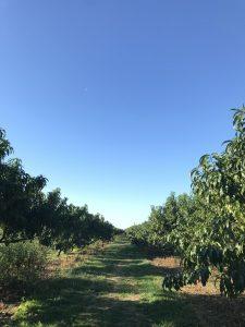 Sunny summer day on a farm