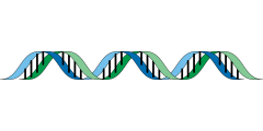 BIO2450L-Genetics; Prof. Christopher Blair