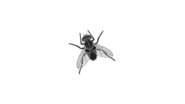 fly_wide-c13878be075486fca2bbc014eccf11e214470314-s800-c85