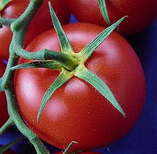 220px-Tomate_gelber_Blütenkelch2