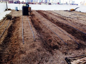 Our plots are ready for seeds!