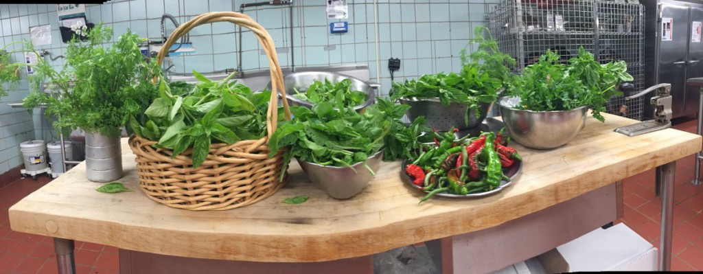 Basil, Cilantro, Parsley, Arugula, Italian Red Peppers