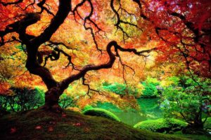 colorful-tree-977