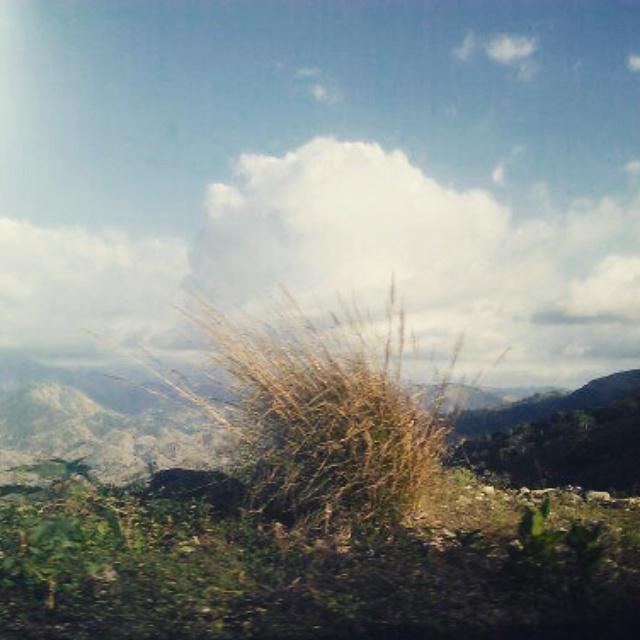 Bushy Mountains
