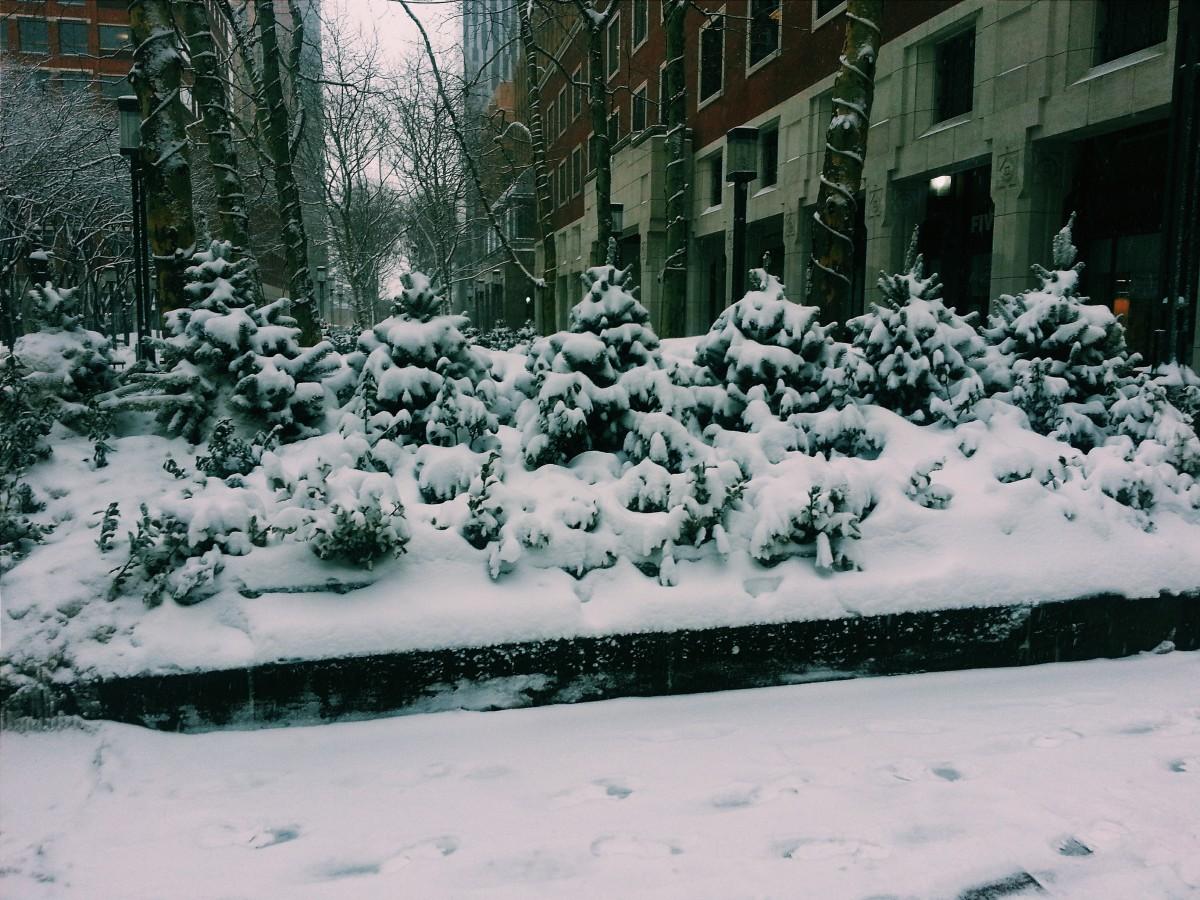 Snowy Little trees