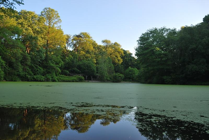 a mossy pond