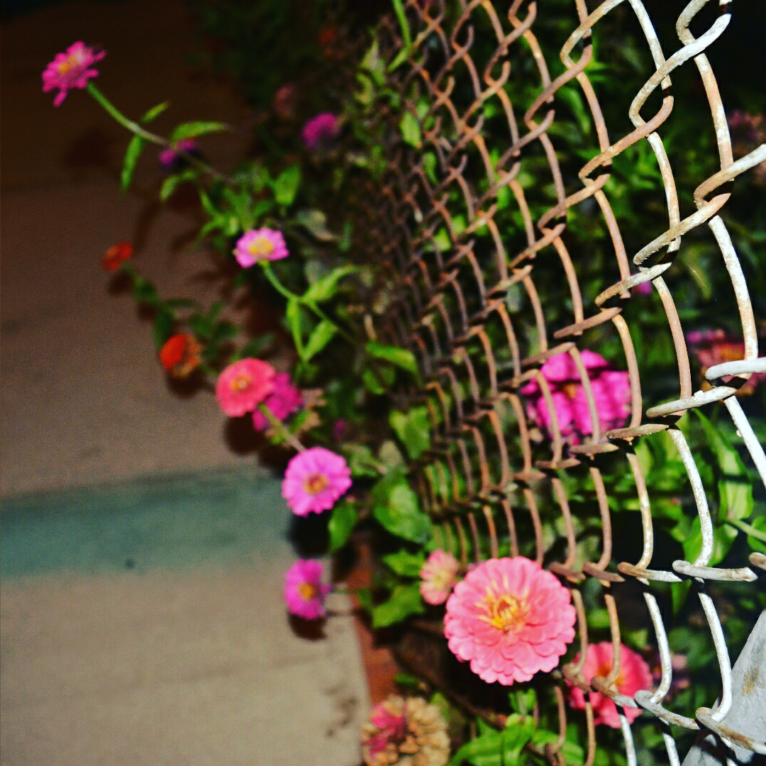 flowers growing through a wire-mesh fence