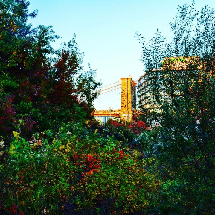 shrubbery hiding a bridge