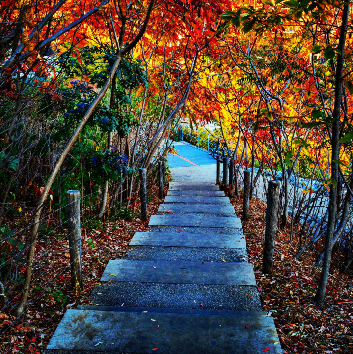 a stone path under fall tree leaves