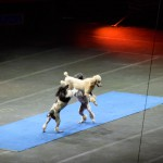 three dogs performing
