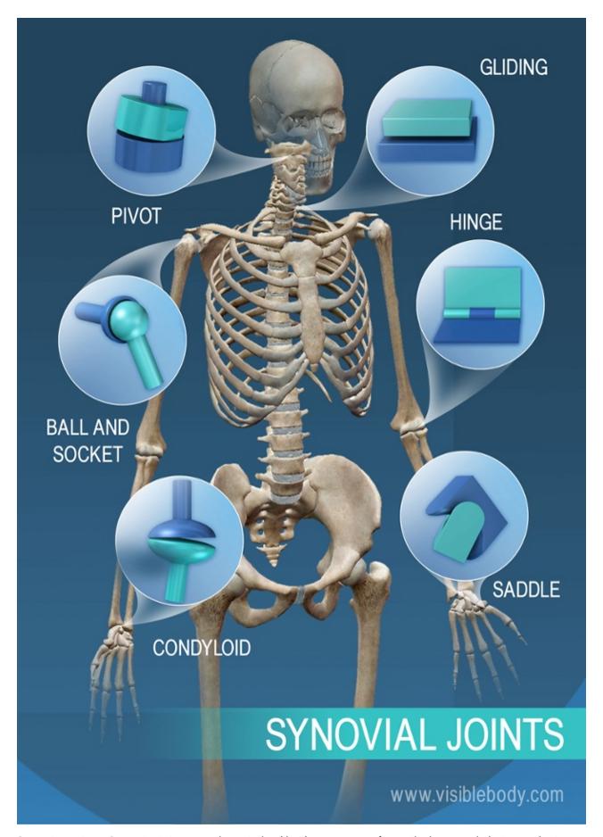 Human Skeleton Comd 1231 Figure Drawing D162 Fa2017