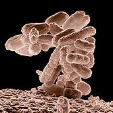 Microbiology (Bio 3302)