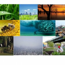ECON 2505, Environmental Econ, sec D-729 Spr2015