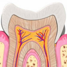 Oral Anatomy Fall 2015
