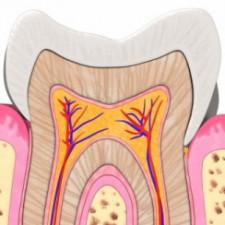 Oral Anatomy FALL 2016