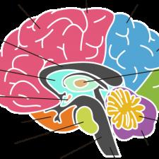 Brain Awareness Day 2020