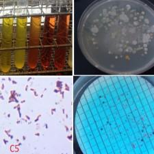 Microbiology Lab Spring 2013