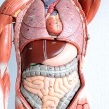 BIO2311 Human Anatomy and Physiology Summer 2021