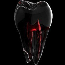 DEN 1112 Oral Anatomy Fall 2021