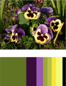 flowercolorscheme